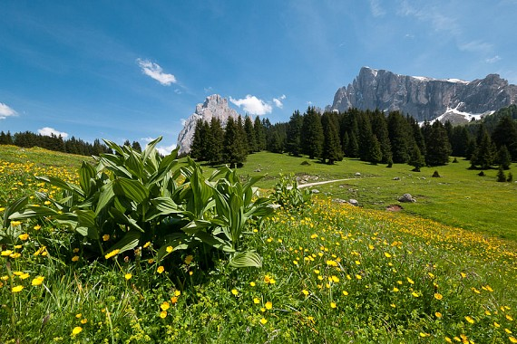 Paesaggi dell'Alpe di Siusi