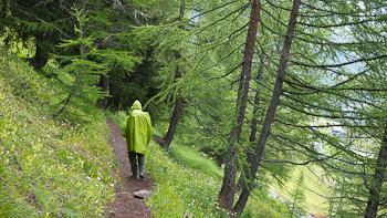 bosco pioggia courmayeur tmb