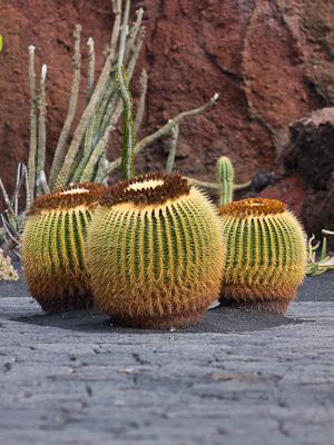 jardin de cactus guatiza lanzarote