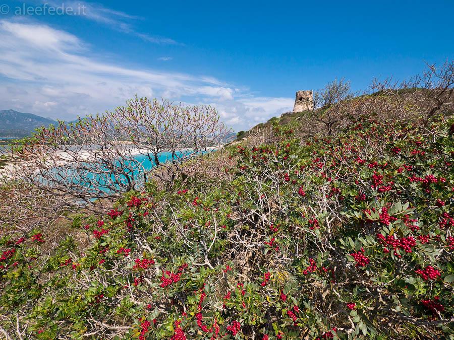 spiaggia di villasimius sardegna