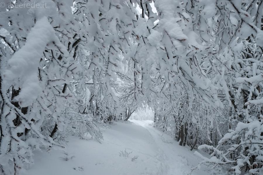 appennino pistoiese ciaspole neve