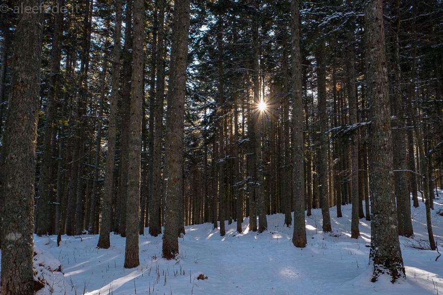 bosco neve racchette