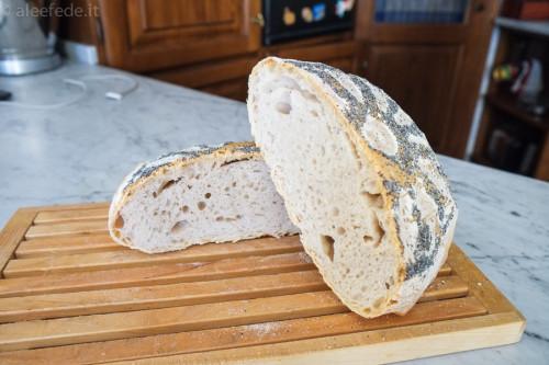 pane no knead
